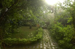 Garden during the monsoons